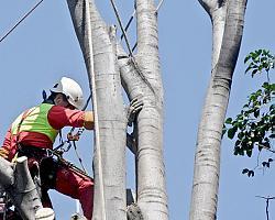 Kurs prac wysokościowych na drzewach